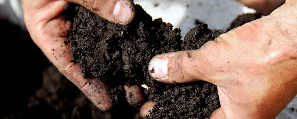The Importance of Soil Testing